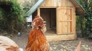 Pallet Hen House Chicken Coop In Under 3 Mins. Poulailler Palette. Gallinero Paleta En 3 Minutos