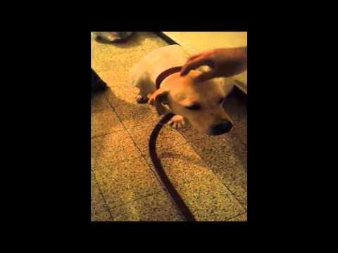 הכלבה שושה לומדת לאהוב מחדש