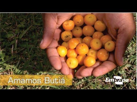 Documentário Amamos Butiá - Embrapa
