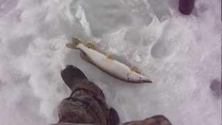 Рыбалка на Алтае Гелевское водохранилище.MP4
