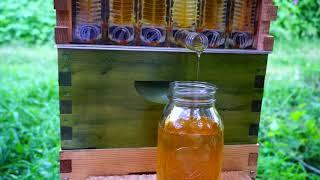 Honey Explosion! Flow Hive in 11 Weeks | Kholo.pk