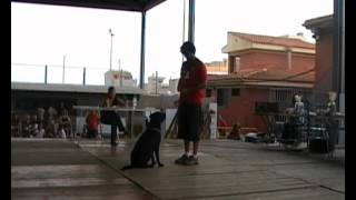 preview picture of video 'CONCURSO CANINO BETXI 2012 OBEDIENCIA.'