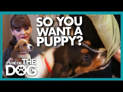 A Beginners Guide to Puppy Training (And Picking the Right Dog for ...