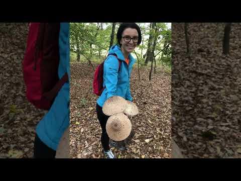 Can vestibular papillomatosis grow