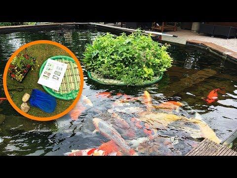Pflanzinsel für Teiche bauen - So geht's! Schwimmende Teichinsel, Teichbepflanzung, Teichpflanzen