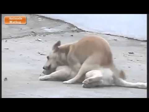 Series Animals Mating ✔ Animals Videos xXx ✔ Animals Funny ▬ Dog Mating Cat Verry Funny