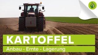 KARTOFFEL (24)   Anbau, Ernte, Lagerung