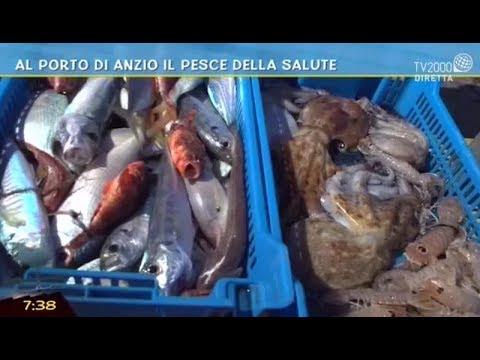 Il bu il navigatore per pescare in Ucraina