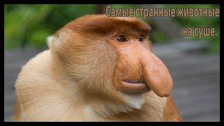 Самые странные в мире животные (На суше)