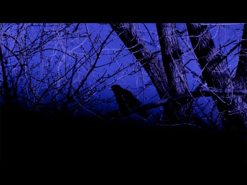 Jean Leloup L'oiseau Vitre