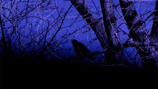 Jean Leloup   L'oiseau Vitre [vidéoclip Officiel]
