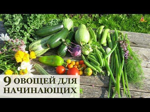 9 самых ПРОСТЫХ овощей для начинающих огородников!