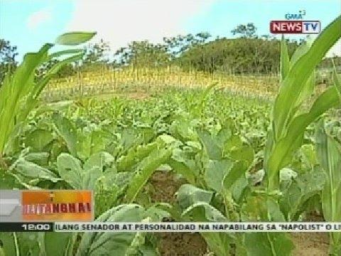 Cream laban halamang-singaw sa mga paa sa pagitan ng mga daliri sa paa