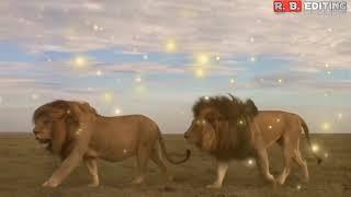 Lion Status For Whatsapp Download Free Tomp3pro