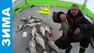 Прикормка для зимней рыбалки из мотыля