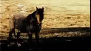 """HORSE HONEY (Feist - """"Honey Honey"""")"""