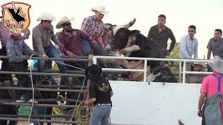 !!Se quería salir El Toro¡¡Martinez Ranch y Rancho Los Olivos En Ceres CA.