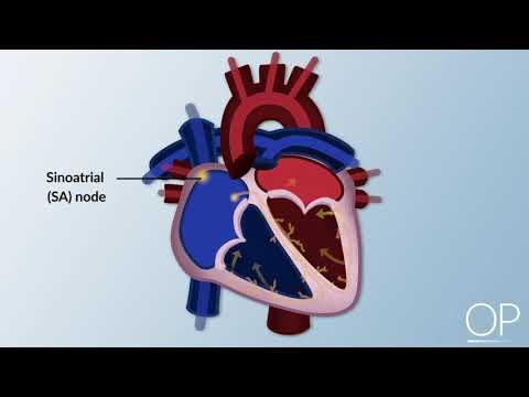 Hipertenzijos taikinio pažeidimas