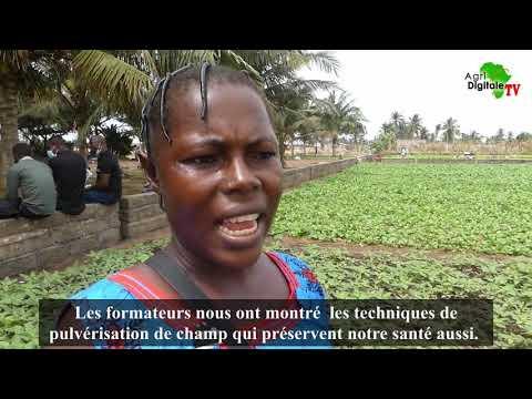 Togo- Les maraîchers à l'école de la sécurité sanitaire Togo- Les maraîchers à l'école de la sécurité sanitaire