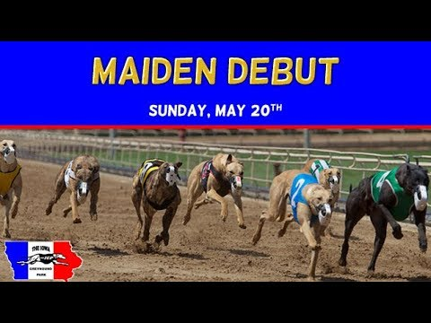 Maiden Debut at The Iowa Greyhound Park 2018