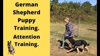 Training a 7 month old German Shepherd female puppy. Owners first lesson.