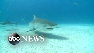 New device touted as preventing shark attacks