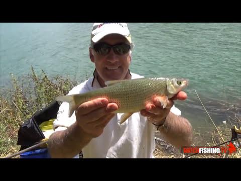 La pesca su una pesce gatto su Kwok in linea