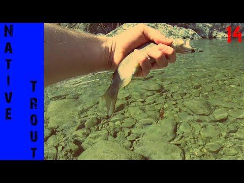 La pesca in Kursk su un abramide comune