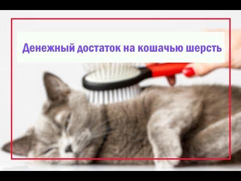 Обряд на богатство на кошачью шерсть. Денежный достаток 🌙🔮
