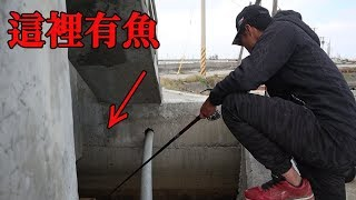 一次釣到好幾種魚!港區排水溝驚喜連連!【首次嘗試前打釣法】