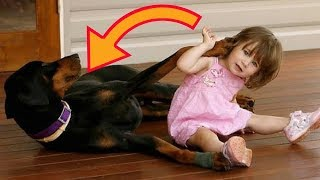 This Dog Threw A Child Across The Yard, But When The Mom Saw Why, She Could Not Believe Her Eyes