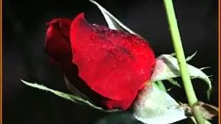 Apoptygma Berzerk   Shine on   YouTube
