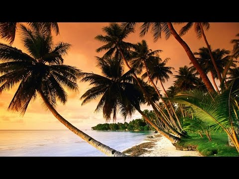 RELAXING Tropical Music & Caribbean Music & Hawaiian Music - Island Paradise 🌴