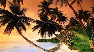 1 Hour of Tropical, Caribbean, and Hawaiian Music