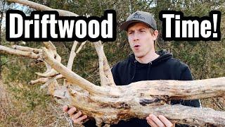 Aquarium Driftwood DIY Search, Setup, & Ideas