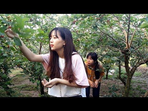 Tết 2 chị em đi dạo Vườn Dâu Tằm ở Long Xuyên   Thôn Nữ Miền Tây