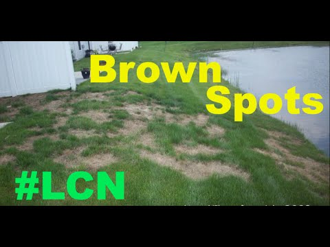 Video Brown Spots In The Lawn - Lawn Detective Series Part 1
