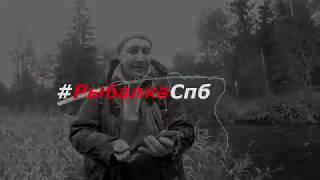 Где в ленинградской области ловят хариуса