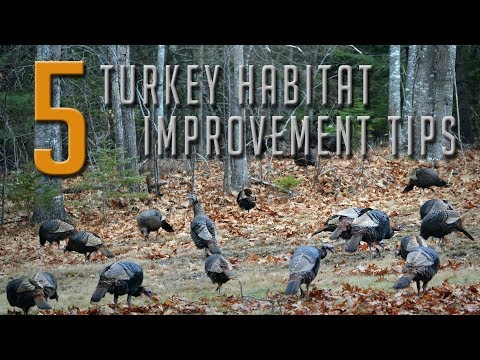 , title : '5 Tips to Attract More Turkeys!