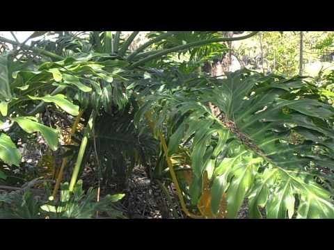 Fotos de rboles de hoja caduca plantas for Arboles frutales de hoja caduca