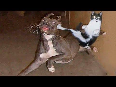 Războiul animalelor