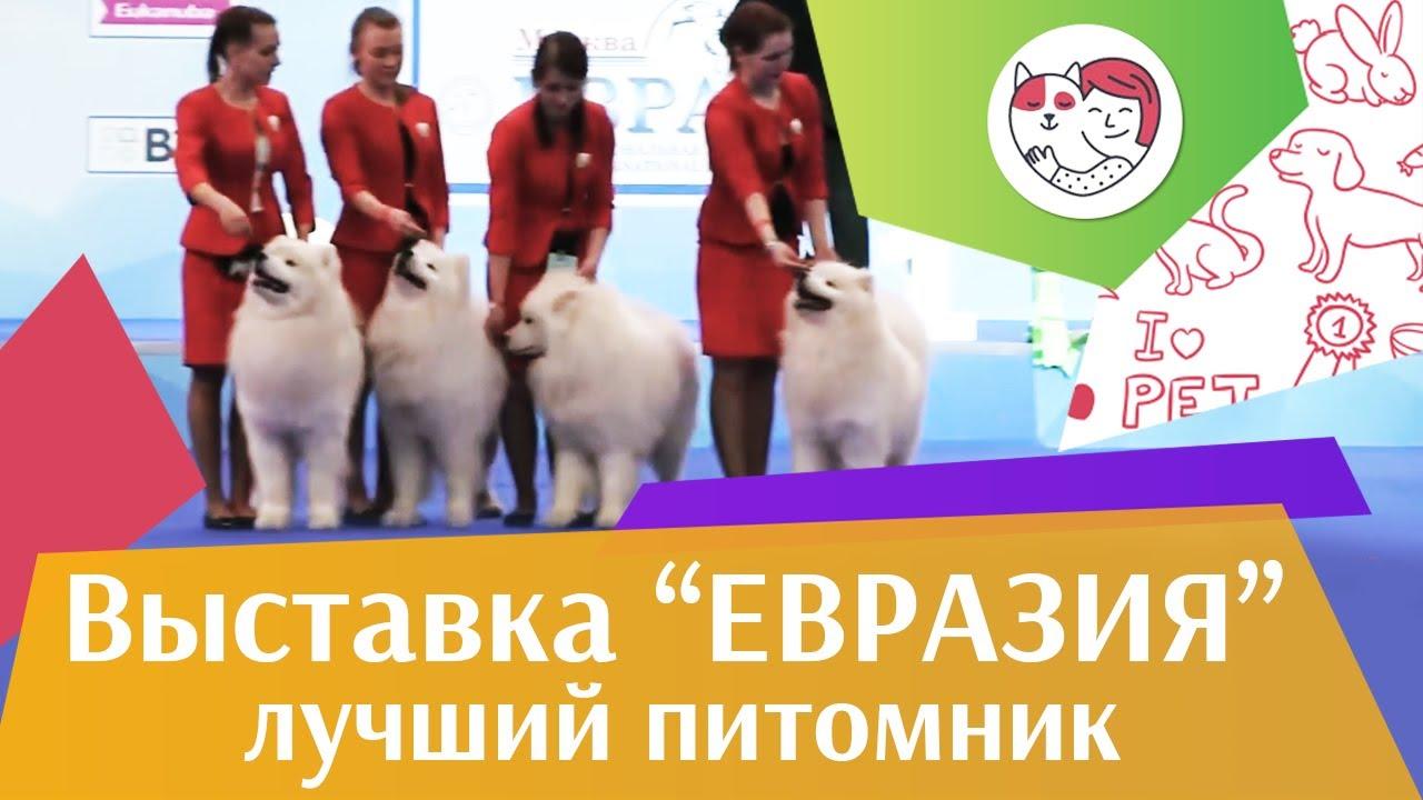 Best in show Лучший питомник 18 марта на Евразии 17 ilikepet