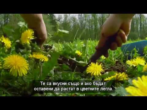 Трева на панкреаса диабет