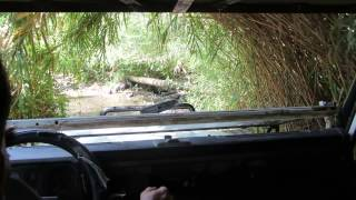 preview picture of video 'A jeep journey at Bethsaida Valley, the Sea of ​​Galilee, Israel (looks like a jungle journey('