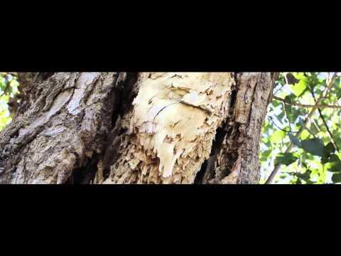 Pillangó zeugma superior kertre nyíló kilátással