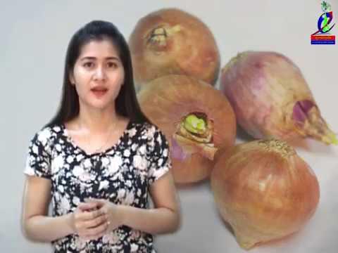 បច្ចេកទេសដាំខ្ទឹមក្រហមក្នុងដបប្លាសិ្ទក, Techniques for planting red onion in a bottle