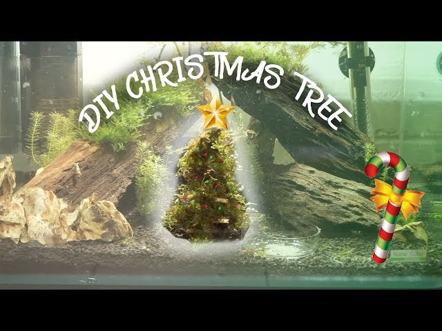 HOW TO: MOSS CHRISTMAS TREE FOR AQUARIUM!