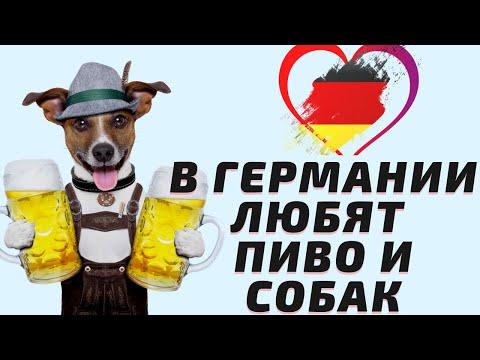 Дорого ли содержать собаку в Германии