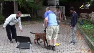 Смотреть онлайн Как отучить пса подбегать к чужим людям