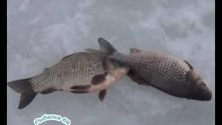 Как рыбалка в сулежском борке
